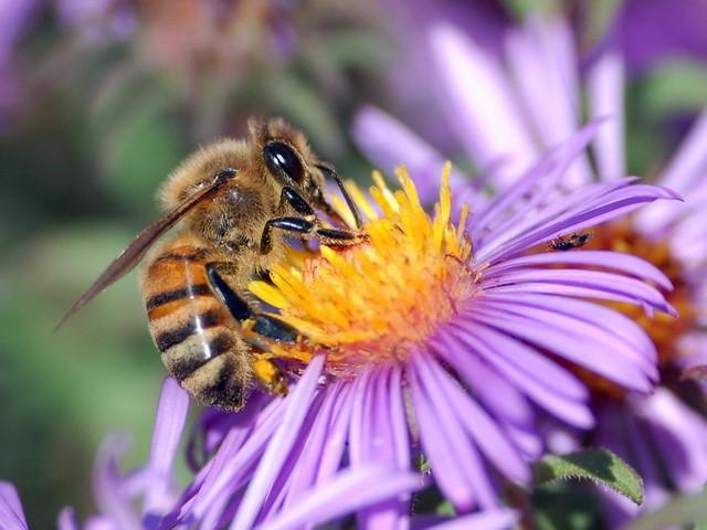 Pčele nestaju