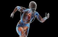 Vaše telo ima ugrađen sat a da vi to ne znate: Dobro upamtite ovaj raspored sati obnove vaših organa