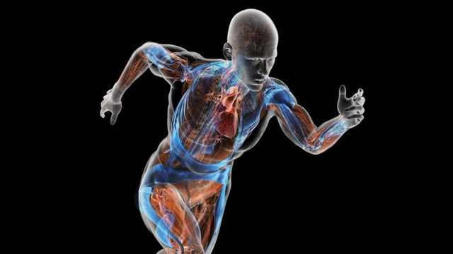 ljudski organi