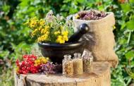 Čišćenjem bubrega na prirodan način ojačajte imunitet, regulišite krvni pritisak