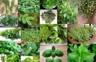 Evo kojim biljkama izlečiti astmu, anginu, glavobolju, kijavicu, opekotine, išijas, upalu zglobova