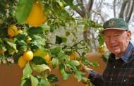 Drastične promene u Srbiji: Temperature kao u Africi do +50 stepeni, gajiće se limun, banana i pomorandža ..