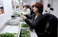 Podnet zahtev za legalizaciju marihuane