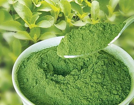stevia-biljka-prah