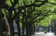10 stabala drveća blizu kuće, za više od 7 godina produžava život