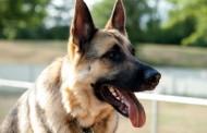 Nikad ih nije zaboravio: Pas se vratio kući posle 3 godine – VIDEO
