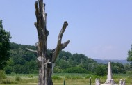 Srbiji se crno piše i preti joj zlo – osušio se Takovski grm: Evo kako je sveto drvo predvidelo smrt Slobe i Obrenovića – VIDEO