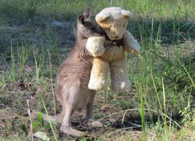 beba-kengur-i-meda