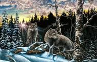 Nije lak test: Koliko na ovoj slici vidite vukova?