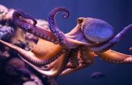 Naučnici su u šoku ali nemojte paničiti: Po sastavu DNK hobotnice su vanzemaljci, a osim toga …