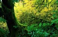 Da li ste znali da u Srbiji postoji prašuma: Evo gde je i kako izgleda – VIDEO