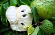 Ova super voćka ubija rak, 10.0000 puta jača nego hemoterapija – VIDEO