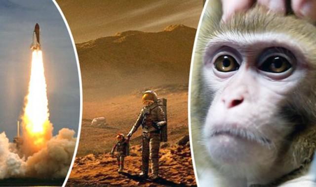 majmun-mars