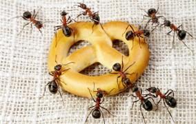 13 jednostavnih načina da zaštitite svoj dom od najezde mrava