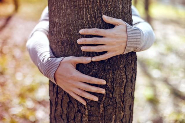 zagrljaj-drvo