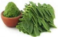 MEDICINSKO OTKRIĆE: Ova biljka leči 5 tipova kancera jajnika, uključujući jetru, pluća i melanom