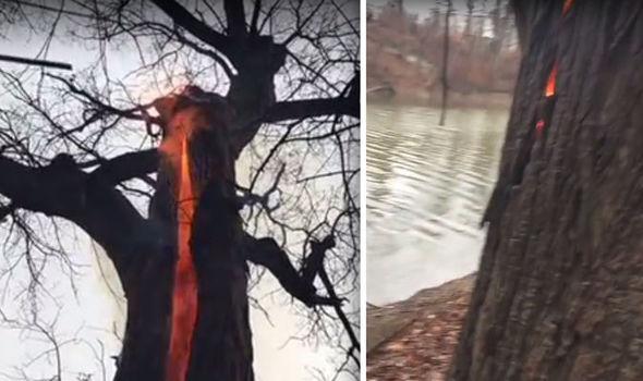 drvo vatra grom