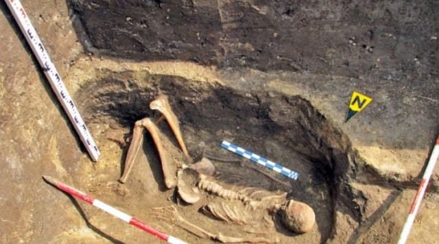 skelet dzinovi rumunija