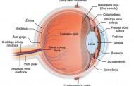 Sprečite gubitak vida i bolesti oka sa ovim receptom
