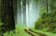 Posle ovog teksta više nikada nećete proći kroz šumu, na isti način – VIDEO