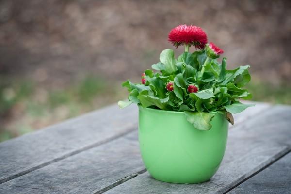 ALTERNATIVNA MEDICINA: Zasadite svoju bolest u saksiju sa cvećem