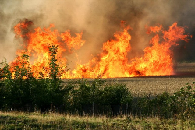 field-fire-burn-corn