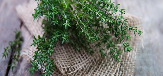 Da li znate da postoji bilje toliko moćno, da uništava streptokoke, herpes, kandidu i grip..?!