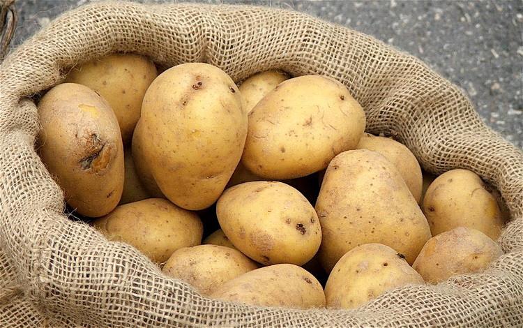 STRUČNJACI OTKRILI: Krompir može imati toksične materije u ovim slučajevima …