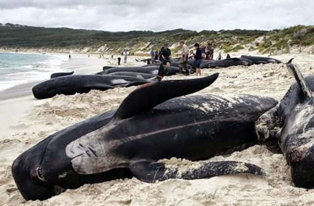kitovi