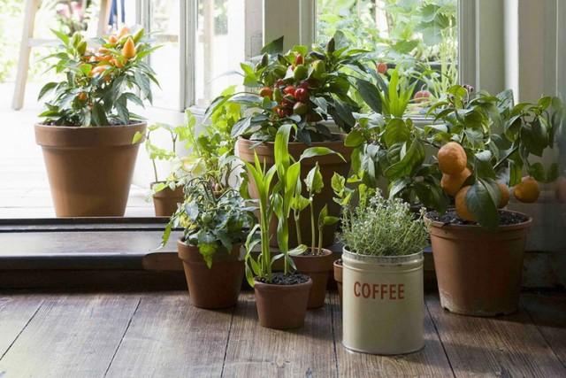 Posadite ove biljke za čist vazduh u vašoj kući