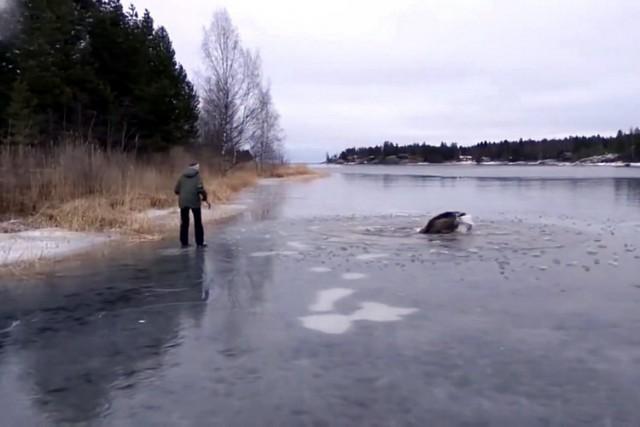 jezero los