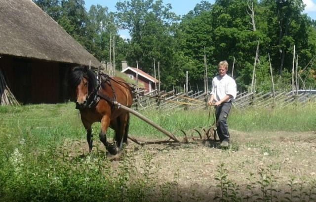 konj njiva oranje