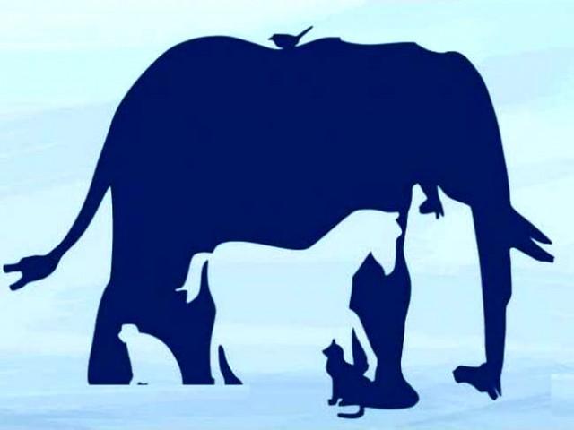 Koliko životinja vidite na ovoj slici? 90 odsto ljudi nije uspelo da ih sve nađe