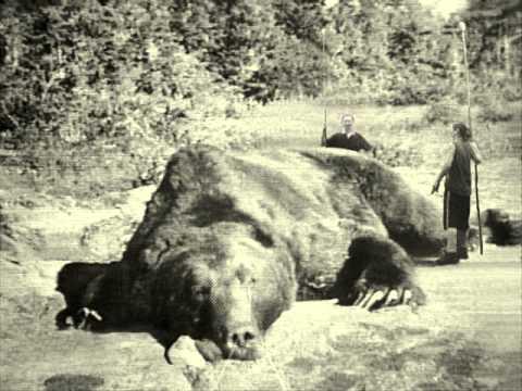 medved sibir