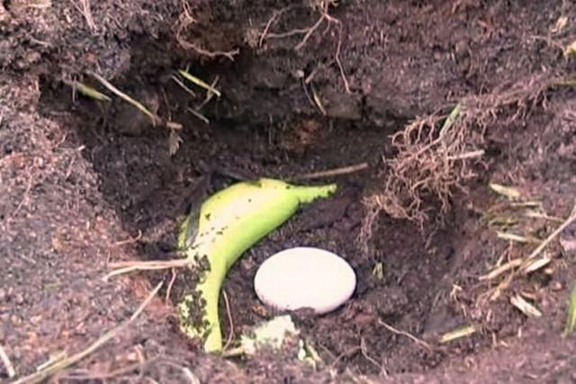 banana i jaje
