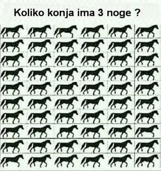 mozgalica konji