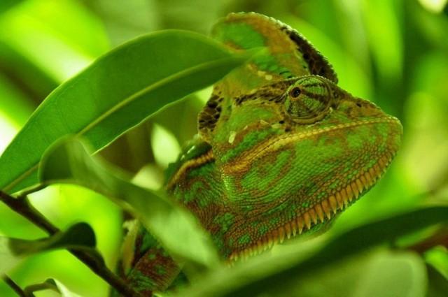 kameleon3
