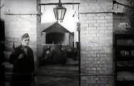 SVEDOČENJE SRPSKOG PATOLOGA: Mi smo utvrdili 700.000 ubijenih Srba u Jasenovcu – a bilo ih je mnogo više