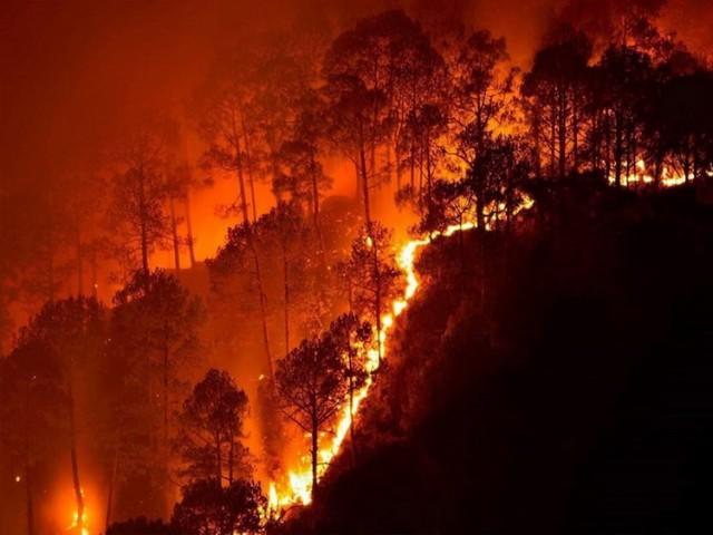 NEVIĐENI ŠOK KOJI KRIJU: Australija nije spaljena prirodnom nepogodom NEGO NAMERNO – STOTINE UHAPŠENIH