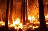 Niko ne zna zašto se ovo događa? U Americi istorijski visoke temperature – Toplotni udari, ekstremne suše i veliki požari …