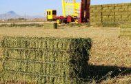 Nijedna zemlja sveta ne izvozi stočnu hranu, a uvozi meso – Nijedna sem Srbije